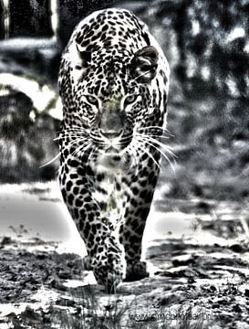 Kat achtig von David Pichler