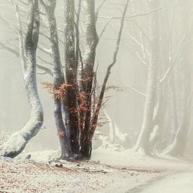 Misty Cold Bibracte von Lars van de Goor