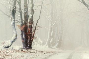 Eisige Tage in Morvan, Frankreich von Lars van de Goor