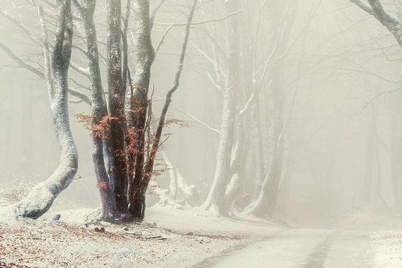Misty Cold Bibracte van Lars van de Goor
