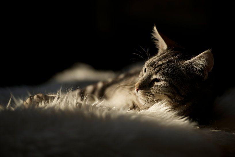 Huisdier / kat / kitten relaxen in de zon van Ramon Siahaya