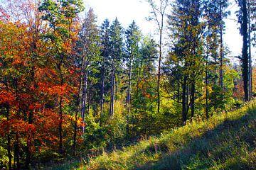 Herbstwald von M.A. Ziehr