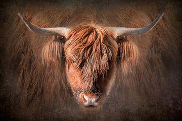 Portret Schotse Hooglander van Danny den Breejen