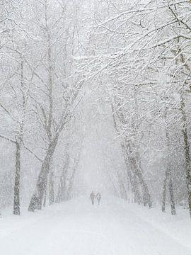 Vondelpark sneeuw wandeling von Dennis van de Water