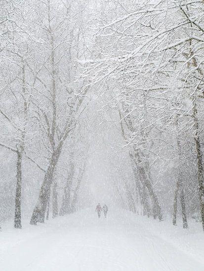 Vondelpark sneeuw wandeling