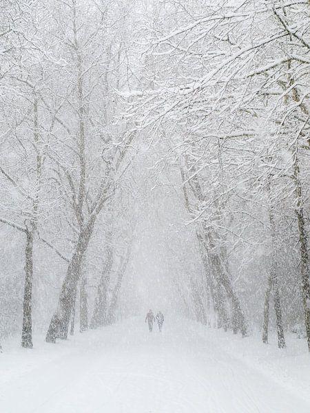 Vondelpark sneeuw wandeling van Dennis van de Water