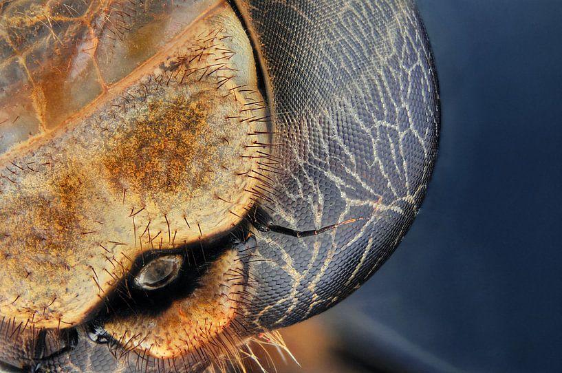 Oog van een libelle van Rob Smit