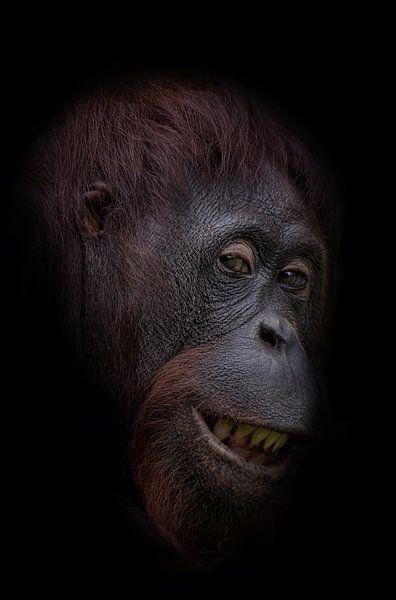 Funny orangutan face von Ron Meijer Photo-Art