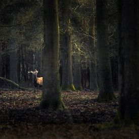 Edelhert in een donker bos van Ton Drijfhamer