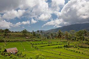 Bali rijstterrassen. De prachtige en dramatische rijstvelden van Jatiluwih in het zuidoosten van Bal
