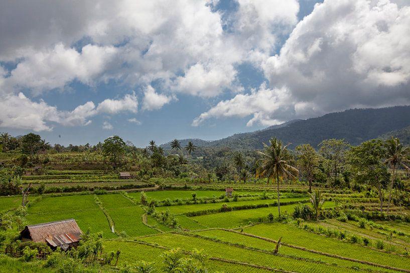 Bali rijstterrassen. De prachtige en dramatische rijstvelden van Jatiluwih in het zuidoosten van Bal van Tjeerd Kruse