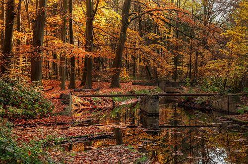 Herfst in het Waterloopbos nabij Marknesse  (2e)