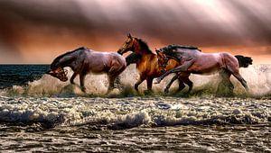 Paarden lopen door het water