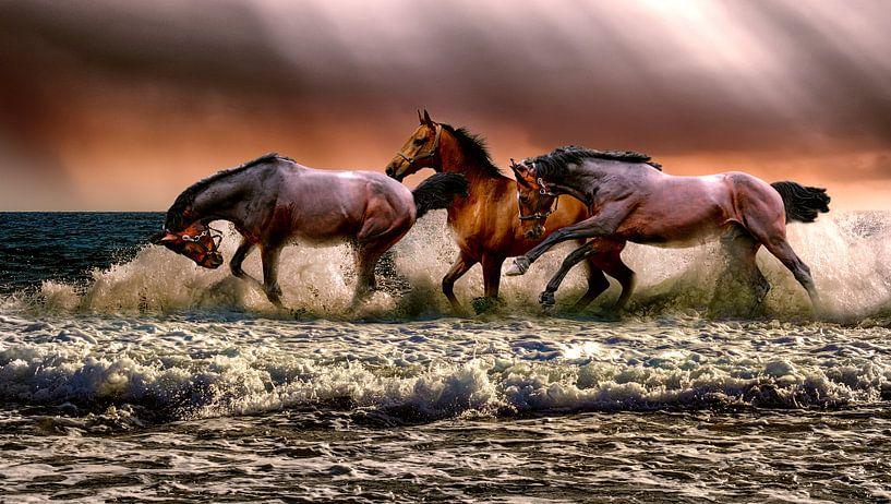 Paarden lopen door het water van Natasja Tollenaar