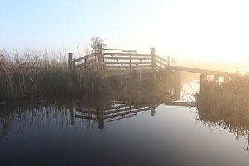 Damhek in de polder van Hester Hielkema