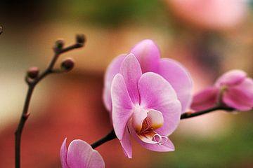 The Orchidee van