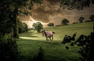 paard in een groene wei