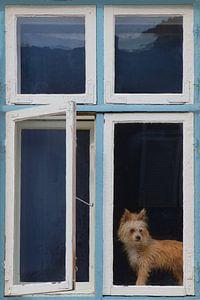 Raam met schattige hond van Ines Porada