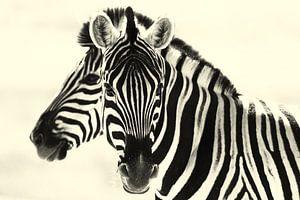 Zwart of wit? Zebra's in Namibië