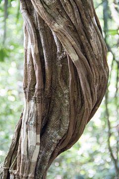 Detailopname van een liaan van