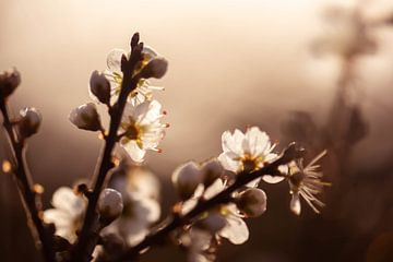 goldene Blüte von Tania Perneel