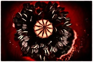 Heart of the poppy van Peter Westerik