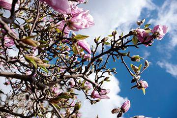 magnolia boom van Nienke Stegeman