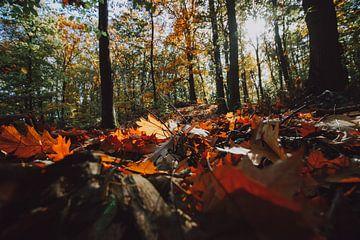Wald mit Herbstfarben, Herbstlicht und Blättern aus den Grund von Fotografiecor .nl