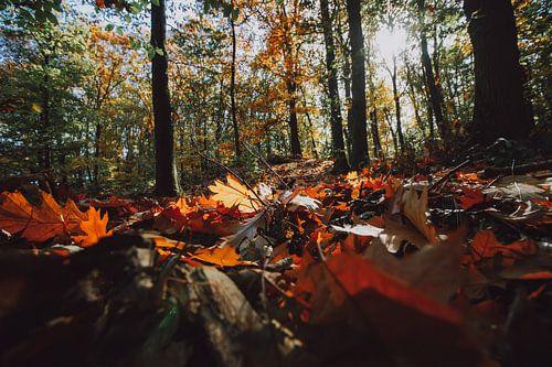 Bos met herfstkleuren, najaarslicht en bladerdek op de grond