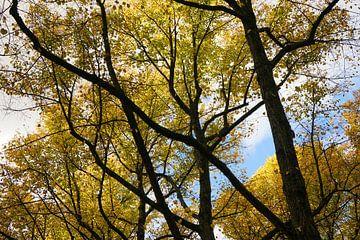 Herbst Muster von Martijn Stoppels