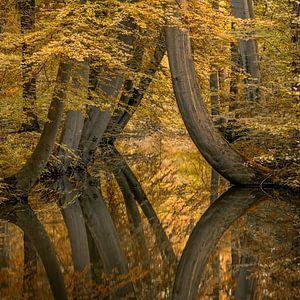 Nieuw : Rare kromme bomen van Toon van den Einde