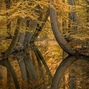Neu : Seltsame krumme Bäume von Toon van den Einde