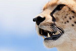 Portret van een cheetah van Caroline Piek
