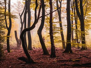 Pompoen mist van Tvurk Photography