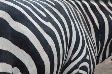 zebra van Claas-Jan Jager