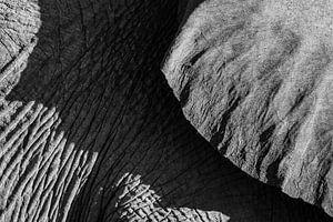Zwart-wit detail foto van een woestijnolifant / olifant - Twyfelfontein, Namibië