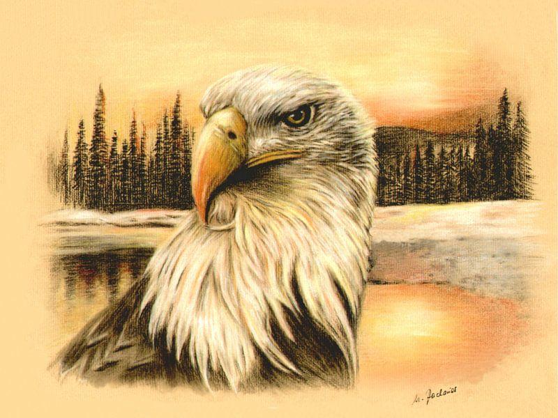 Bald Eagle in het wild van Marita Zacharias