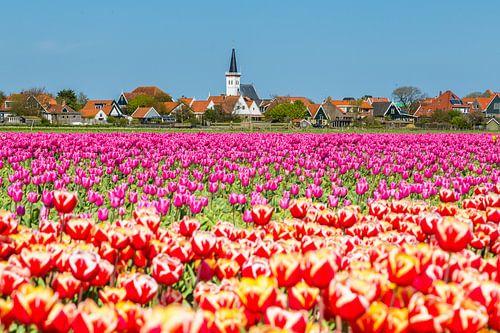 Dorpsgezicht Den Hoorn Texel