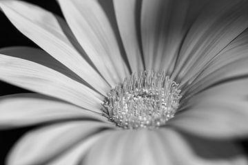 In Schwarz und Weiß verwandelt von Jefra Creations