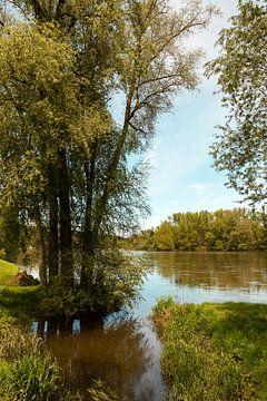 bomen langs een rivier in de zomer van Bernadet Gribnau