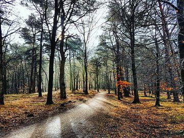 Zon door bomen, kleurrijk Spanderswoud van