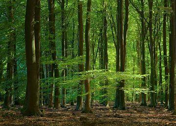 Sommerzeit im Speulder-Wald von Michelle Coppiens