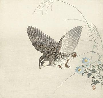 Fliegende Wachteln von Ohara Koson