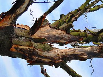 Tree Magic 140 van MoArt (Maurice Heuts)