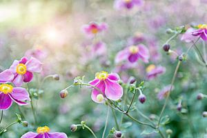 Flowers van Marijke Trienekens