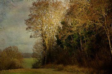 Bosrand Haccourt. van Jan Pycke