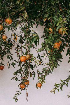 Oranje granaatappels op Bonaire van Annemarie Dufrasnes