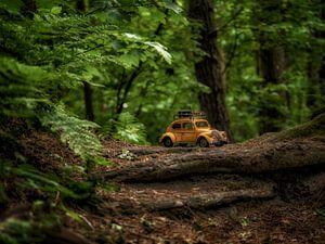 Riesenwälder 2