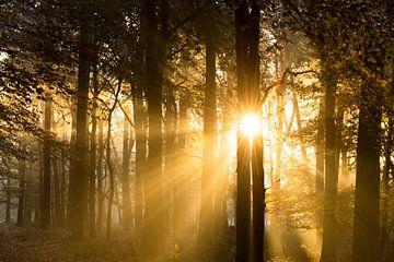 Zonsopkomst in het bos van Judith Noorlandt