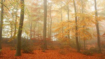 Herfst en nevel 2 Panorama uitsnede van Joop de Lange